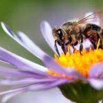 На 20 май отдаваме почит на медоносните пчели