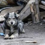 "Фондация ""Четири лапи"" ще помага на Ракитово, Костандово и Дорково"