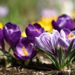 През март времето ще е променливо - с чести превалявания