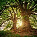Открит е възрастният мъж, изгубил се в гора край Равногор