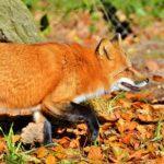 4 октомври : Световен ден за защита на животните