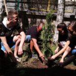 """Зрелостници от ПГХВТ """"Ат. Ченгелев"""" засадиха дърво в двора за да оставят спомен"""