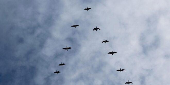 Наближава време за дългия път на прелетните птици на юг