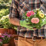 На 1 август се чества Денят на градинаря. Имен ден празнуват Здравко и Здравка