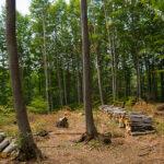 Заловиха двама пещерци превозващи незаконна дървесина във Велинград