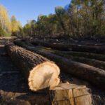 Подаваме сигнали за незаконна сеч в гората чрез безплатно приложение на WWF