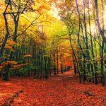 21 септември е последният летен ден за тази година