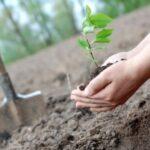 В Седмицата на гората засадиха 300 дръвчета на територията на община Пещера