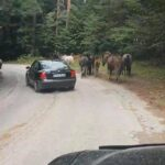 Прибраха безстопанствени коне от селището Свети константин. Издирват се собствениците им